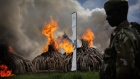 Kenya burns huge stockpile of elephant ivory tusks