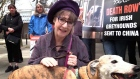 Pauline McLynn protests over export of Irish greyhounds to China