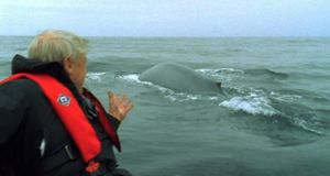The Life of Mammals (2002): The Blue Whale is the largest mammal on the plant, 30m long, 200 tonnes with a heart the size of a car. It eats up to 40 million krill. For all its size, one minute there is no sign and the next it is right beside you, as Attenborough discovered