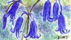 "Wood carpeting bluebells: ""Falls of sky-colour."" Illustration: Michael Viney   Falls of sky-colour: wood-carpeting bluebells. Illustration: Michael Viney"