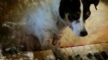 Heart of a Dog review: Laurie Anderson makes the experimental delicious