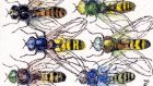 Hoverflies: many are farmer friendly. Illustration: Michael Viney