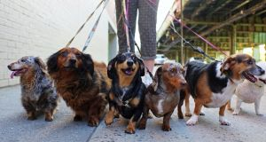 Dog minding can boost your income
