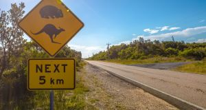 Philip Lynch: 'On our bush block, an hour's drive south of Hobart, we can often go for days without witnessing any other human activity... the island's rich array of marsupials commandeer the highways and byways from dusk to dawn.'