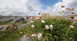 Flowers on the Burren: 'When I was a kid I went to the Burren on many school tours,' says Áine Mae O'Mahony, who lost her sight in 2007. Photograph: Istockphoto