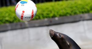 Watson the sea-lion aims to predict the outcome of France's games in Euro 2016. File photograph: Wolfgang Rattay/Reuters