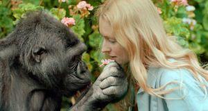Modern family: Koko with Penny Patterson, who said she'd taught the gorilla to sign up to 1,000 words