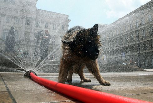 THAT'S BETTER: A dog cools itself off with water from a hose on a hot day in Warsaw, Poland. Photograph: Tomasz Gzell/EPA
