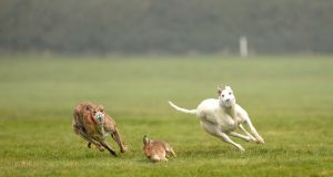 Independent TD Maureen O'Sullivan's  Bill that proposed to ban hare coursing in Ireland was defeated by 164 to 20 votes. Photograph: Dara Mac Dónaill