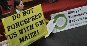 Hungarian Greenpeace activists demonstrate against genetically modified organism food. Photograph: Ferenc Isza/AFP/Getty Images