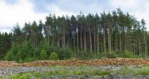Minister of State Andrew Doyle visited Leitrim  on Tuesday to meet farmers who say they are being forced to compete for land with foreign and Irish investors who were getting involved in forestry and securing  favourable treatment from the banks. File photograph: Getty Images