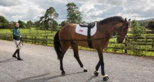 Olympic rein: Greg Broderick with MHS Going Global at Ballypatrick Stables. Photo: John D Kelly