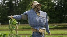 A scarecrow on duty in an Irish school garden. Photograph: Richard Johnston