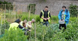 Ciarán Burke and Darragh Smith working with others in the walled garden in Marlay Park, Rathfarnham, Dublin. Photograph: Cyril Byrne