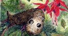 Elephant hawkmoth caterpillar: spectacular and fearsome. Illustration Michael Viney