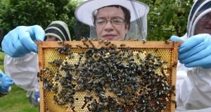 Louth beekeeper Gráinne Downey: a team of academics researching bees is seeking access to wild bees to study their biodiversity. Photograph: Cyril Byrne/The Irish Times