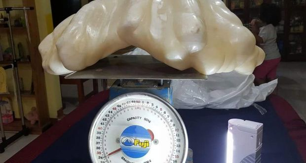 Giant pearl likely to be worth €88m kept under fisherman's bed