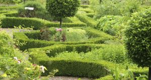 Box hedging in the gardens of Ballymaloe Cookery School, Co Cork. Photograph: Richard Johnston
