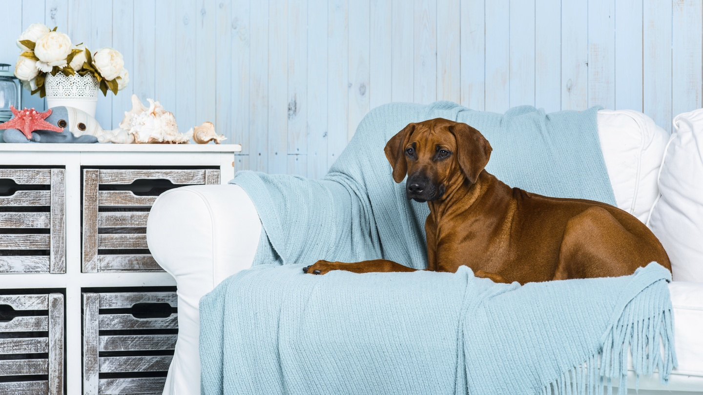 Kick The Dog Off Sofa And 14 More Tips For An Allergy Proof Home Extractor Fan A 2 Way Switch Boardsie