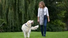 Love, unleashed: Marley and Me stories from Irish doggie people