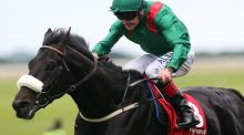 Dermot Weld has confirmed Harzand will run in the Arc. Photograph: Getty