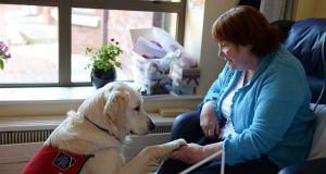 Rian the care dog with Penny Butler at Our Lady's Hospice, Harold's Cross. Photograph: Eric Luke