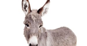 Nursing homes around the country have animals ranging from donkeys to rabbits.