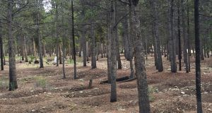 Unmarked graves of Irish miners who died who died during the Colorado silver rush of 1877-90