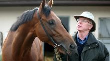 John Oxx will need to have Born To Be at his best to win the Blenheim Stakes. Photograph: Lorraine O'Sullivan/Inpho.