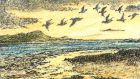 Peak arrival: flocks of geese arrive from the Arctic in October. Illustration: Michael Viney