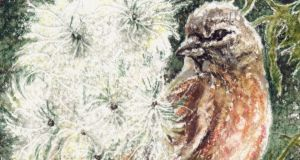 Favoured food: A linnet at thistledown. Illustration: Michael Viney