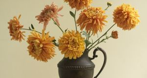 Autumn-flowering chrysanthemums 'Orange Allouise' from Fionnuala Fallon's garden. Photograph: Richard Johnston