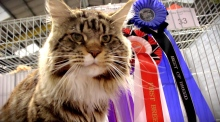 Top cats compete in Dublin
