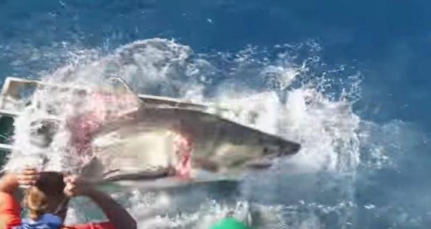 Bimini Sharklab Biminisharklab