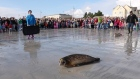 Rescued seal pups are released back into the wild