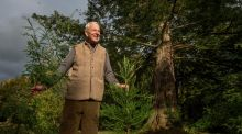 The world's largest  California redwood grove – in Birr?