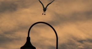 NIGHT FLIGHT: A seagull lands on a lamppost at sunset in Howth in Dublin. Photograph: Dave Meehan/The Irish Times