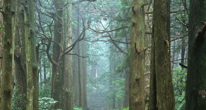 The Daimon-zaka forest path leading to the Nachi Taisha grand shrine at the end of Kumano Kodo
