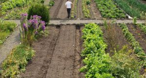 Overview of the walled kitchen garden of Burtown House in County Carlow