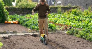 Organic grower Dermot Carey sowing seed in the walled kitchen garden of Burtown House in County Carlow