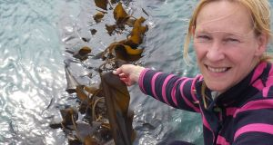 Kate Burns  is growing thousands of tonnes of kelp on ropes that extend out from the shoreline into the sea around Rathlin. The small island off the north coast  has emerged as an unlikely potential supplier of edible seaweed to Japan - a country whose own stocks have been hit by the Fukushima nuclear disaster. Photograph: Kate Burns/PA Wire