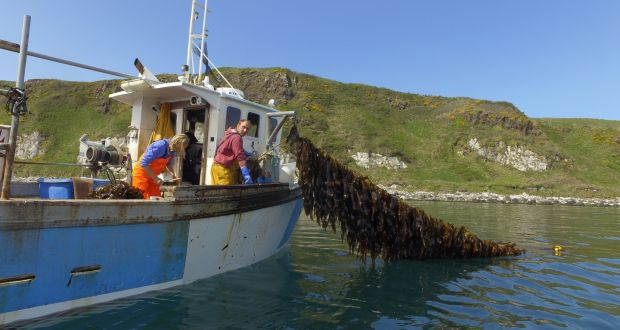 Seaweed: the next big step for Irish food and farming?