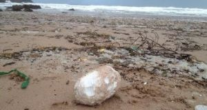 An example of a palm oil ball which can be toxic to dogs found on Fistral beach in Cornwall. Photograph: Dave Meredith