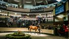 Some 1,753 horses have been catalogued for this week's sales at Goffs