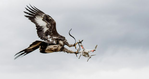 Eagles Vs Drones French Army Trains Birds Of Prey For Combat