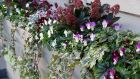 A winter window box filled with skimmias, heucheras, trailing ivies and winter-flowering pansies. Photograph: Tig Mays