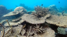 Great Barrier Reef suffers largest coral die-off on record