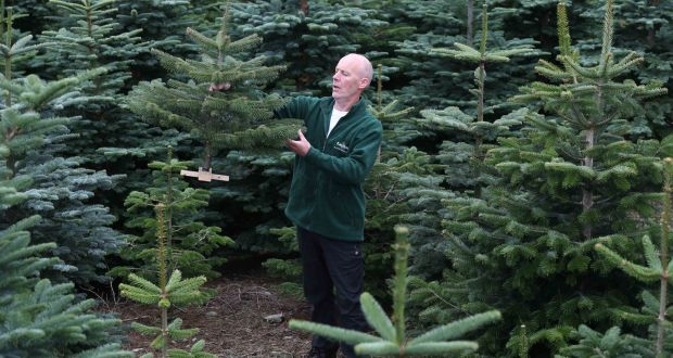 Artifical Christmas Trees.Which Are Greener Real Or Artificial Christmas Trees