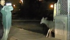 Doe in distress: police officer rescues trapped deer