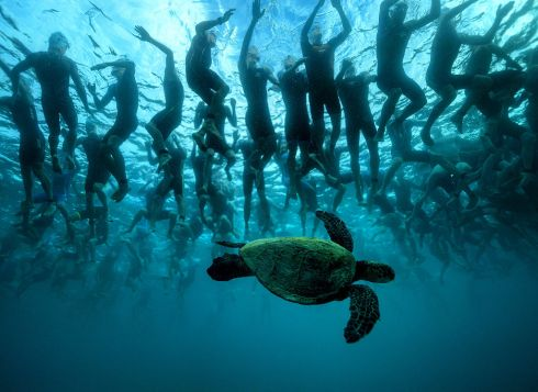 The green sea turtle, also known as 'Honu', is a symbol of good luck and longevity in Hawaiian lore. This native friend provides a little mystique to the 2,300 athletes who await the start signal of a 140.6-mile journey at the 2016 IRONMAN World Championship triathlon on October 8th in Kailua Kona, Hawaii. Photograph: Donald Miralle/IRONMAN via Getty Images